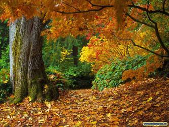 Fall Leaves Wallpaper by Fall-Leaves-Club