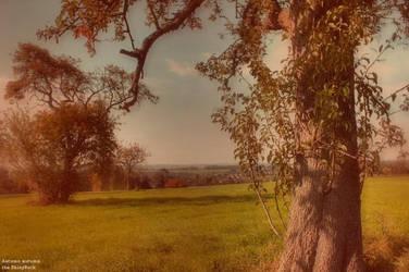 Autumn autumn by Fall-Leaves-Club