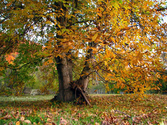 LOVE by Fall-Leaves-Club