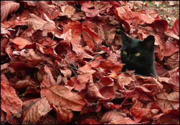 Flame- by Fall-Leaves-Club