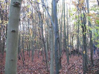Wandlebury woods by Fall-Leaves-Club