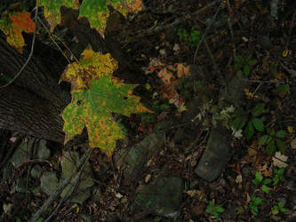 Natural Change by Fall-Leaves-Club