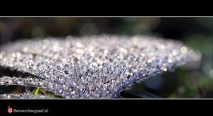 Jewels of Nature  XX by Betuwefotograaf