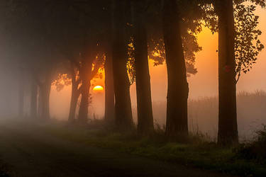'Twilight Woods' by Betuwefotograaf