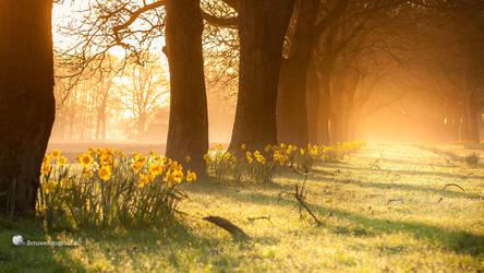 Eastern Light by Betuwefotograaf