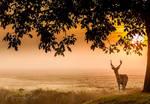 It's looks like a fairytale..... by Betuwefotograaf