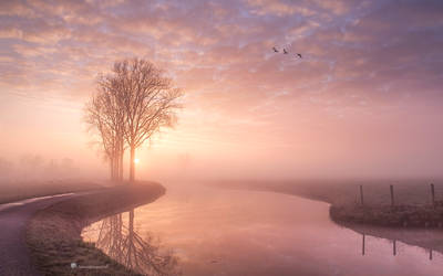 Give me a title.....? by Betuwefotograaf