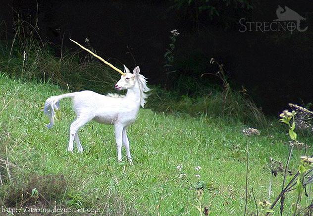 Real Unicorn By Strecno On Deviantart