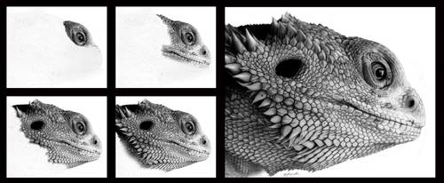 Tutorial - Drawing Face of the Dragon by erwinpineda
