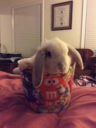 Bunny in the bucket by notsuchanepicperson