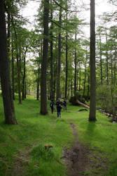Troll skog by yrpa