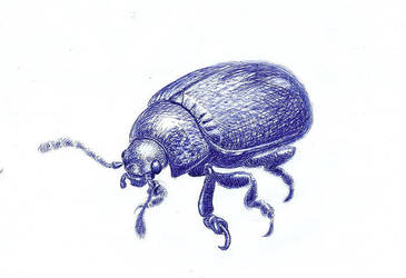 beetle by jus34