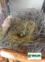 Eagle Nest - Sinnemahoning State Park, PA by AlexCFriend