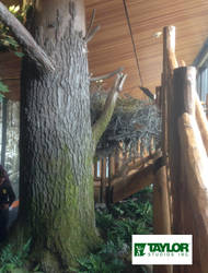 Eagle Nest Back - Sinnemahoning State Park, PA by AlexCFriend