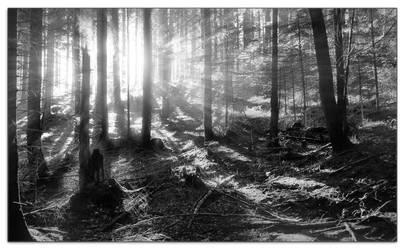 TheForestIncident by schwarz1977