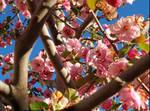 Spring by xXDoggieLover02Xx
