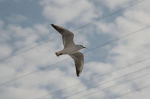 Gull by MAEDesign