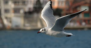 The Gull by MAEDesign