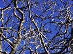 Egil Tree by MAEDesign