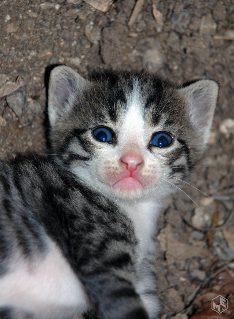 Kitten by MAEDesign