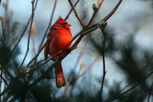 In the Winter Garden by clippercarrillo