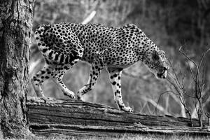 Catwalk by clippercarrillo