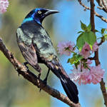 Grackle City by clippercarrillo