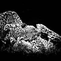 Cheetah Love by clippercarrillo