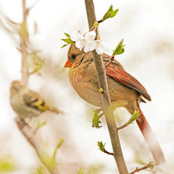Springtime by clippercarrillo