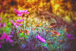 Wildflowers by clippercarrillo