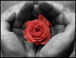 Rose in my hands by Lara-Princess