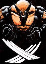 Wolverine color sketch by RyanStegman