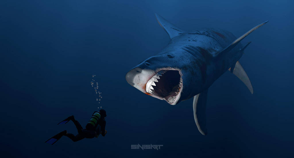 Megalodon by sinisart by Sinisart