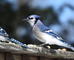 Beautiful in Blue by CJCNightFox