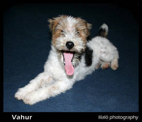Vahur 3 by lilalo-art