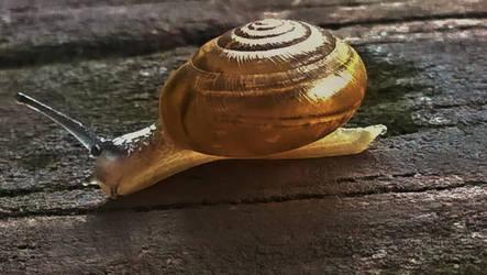 Little Garden Snail by Sharondipity