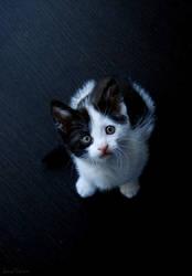 Little kitten by laura75325