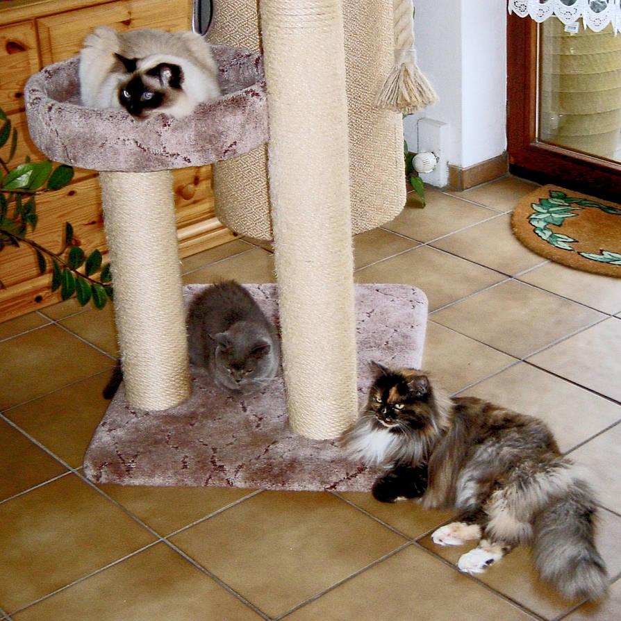 All3catsi by ScraNo