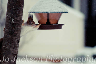 Squirrel in the snow 2 by Britwitch-1981