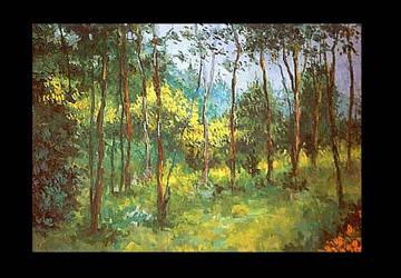 Muir Woods by barandiaran