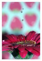 Flower Splashes by lauRAWR