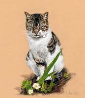 Aiken Cats - Henry by Utlah