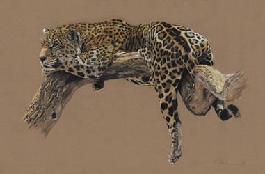 Jaguar (2014) by Utlah