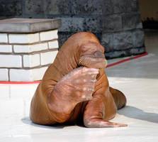 Walrus by fremlin