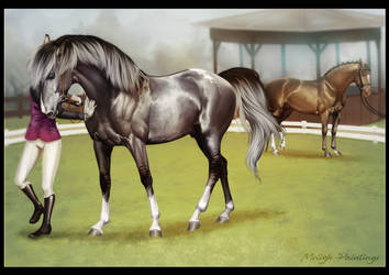 Aslaugur Conformation Show by BH-Stables