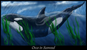 Orca in Seaweed by SyKoticOrKa