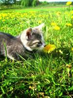 Little dreamer by mistty002