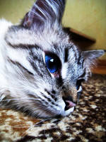 Hello kitty... by mistty002