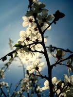 Spring photo by mistty002