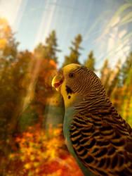 I love Autumn by mistty002